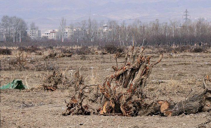 مردم بپذیرند «باغ سیب مهرشهر »مرده است/ رهبری برای احیای باغ دستور دادند