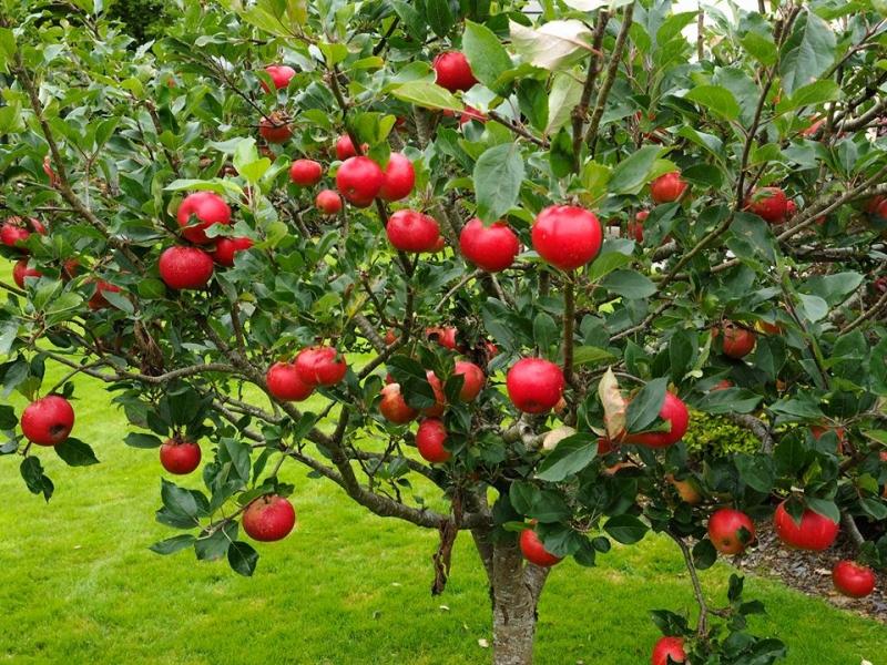 باغ سیب مهرشهر