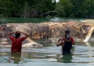 معمای موجود اسرار آمیز در سواحل اندونزی حل شد